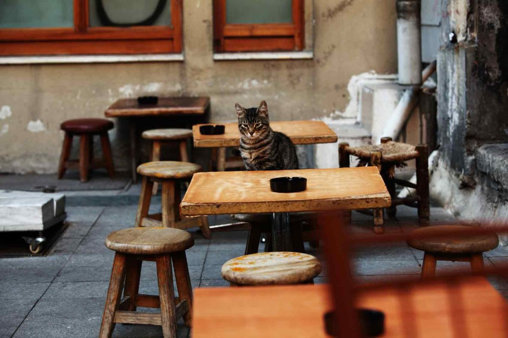 Cat Cafes are Real and Are Now Apparently Legal in the US