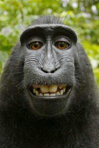 monkey8n-1-web