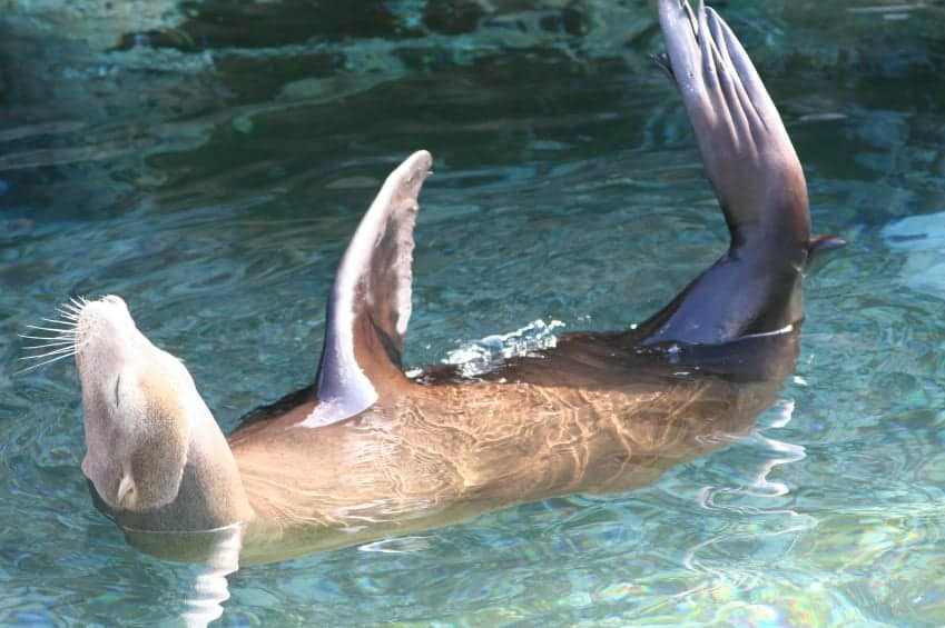 Why You May Be Entitled to a Payout From SeaWorld