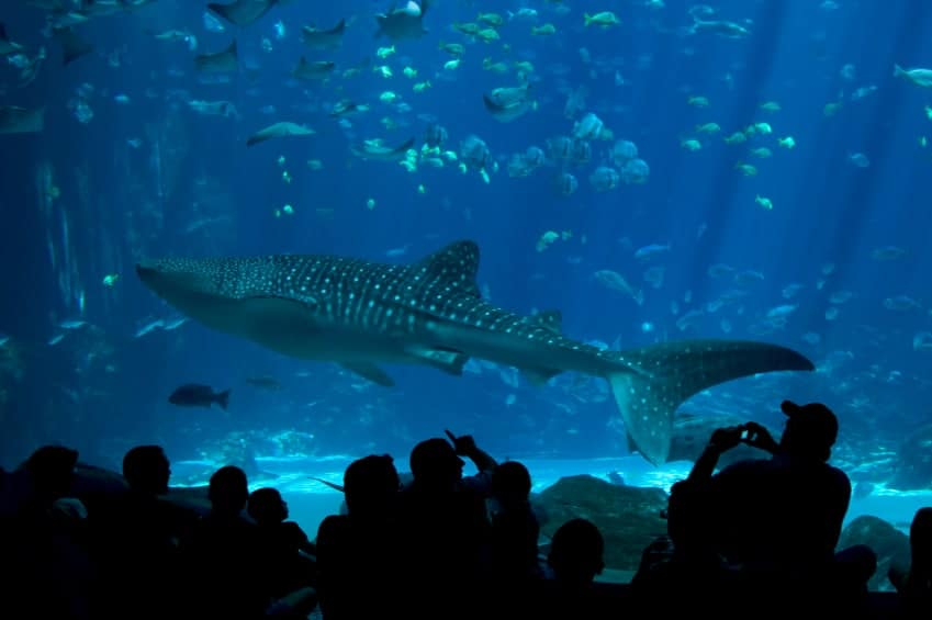 Hooked on Shark Tank?